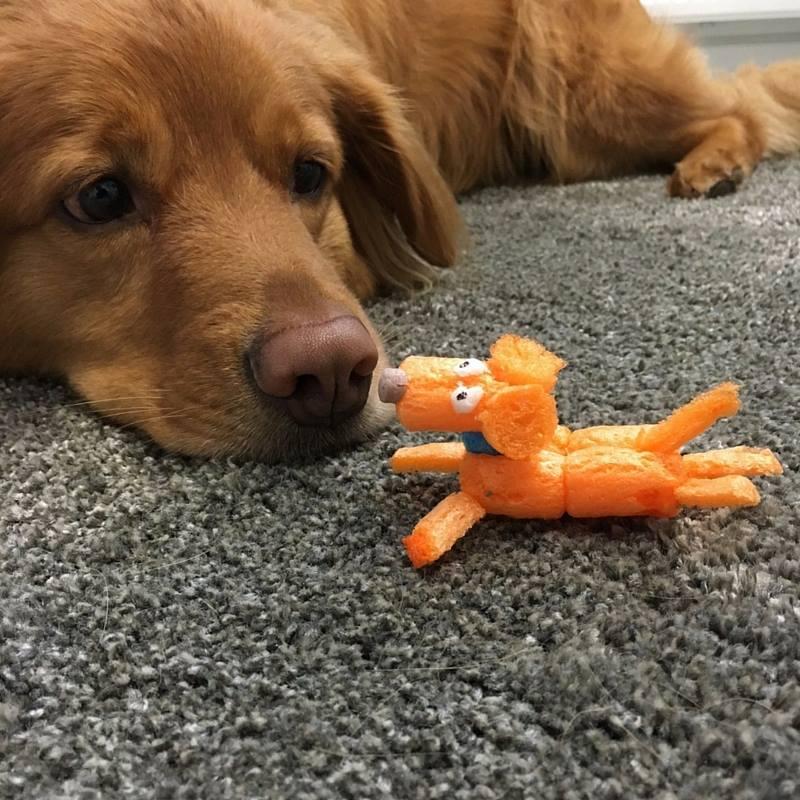 Hilfe, mein Hund hat PlayMais gegessen!